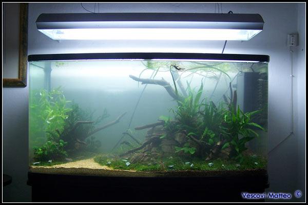 Eccovi il mio nuovo acquario nuove pag5 acquaportal for Acquario marino 100 litri prezzo