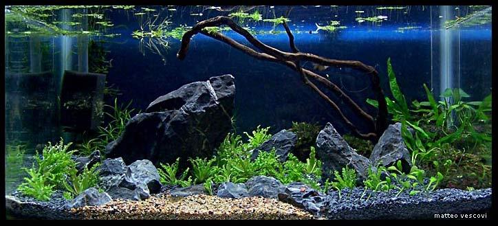 Giardino roccioso con laghetto acquaportal forum for Legni per acquario