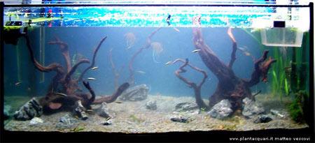 Woha 120 50 50 di matteo vescovi for Legni per acquario